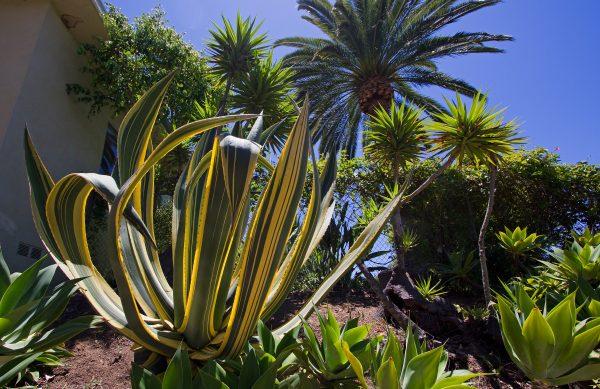 palm trees backyard