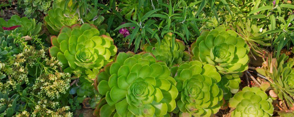 landscape deight plants in backyard
