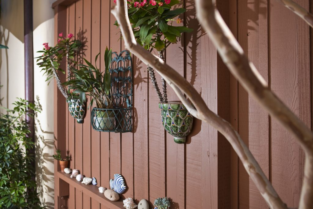 plants, seashells, gardening, flowers, house, montecito, sants barbara