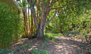 back yard, landscape, garden